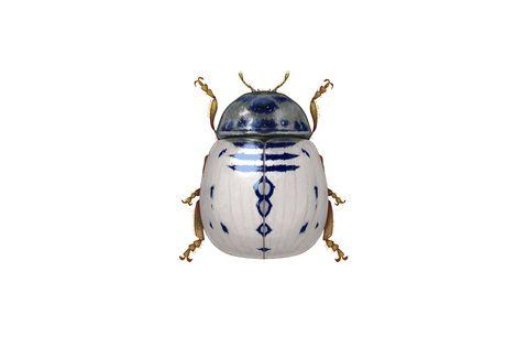 Insect, Beetle, Invertebrate, Leaf beetle, Weevil, Illustration,