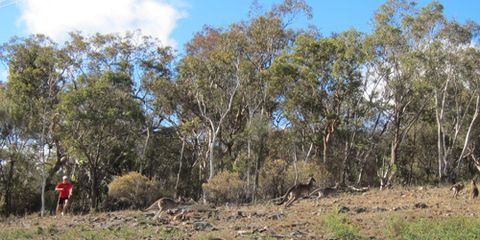 Running with kangaroos. (Alex Hutchinson)