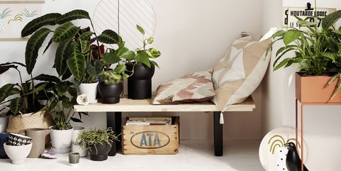shelf, furniture, houseplant, room, interior design, living room, shelving, table, plant, home,