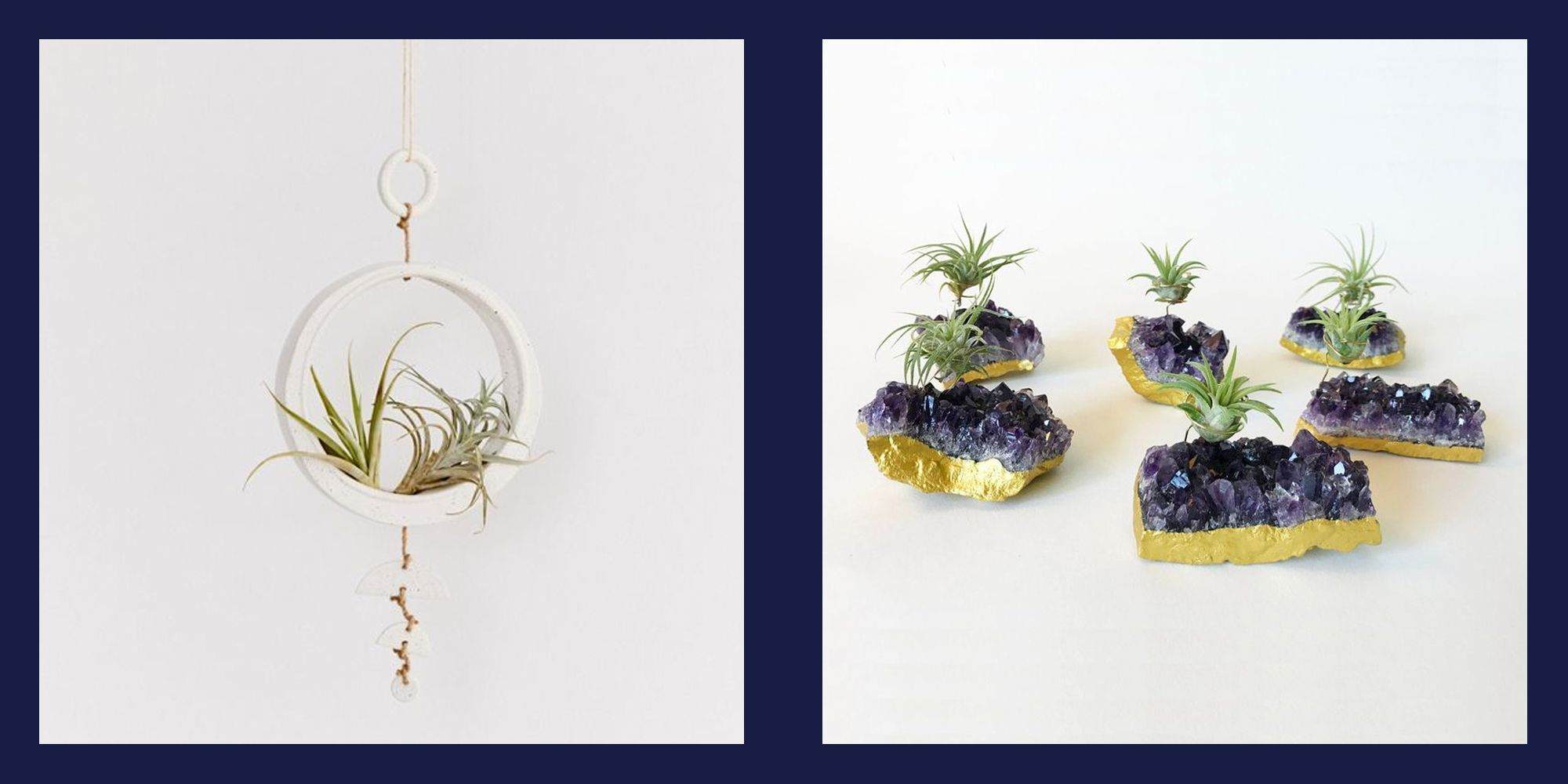 14 Creative Air Plant Display Ideas Best Air Plants For Indoors