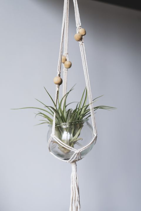 bathroom plants tillandsia