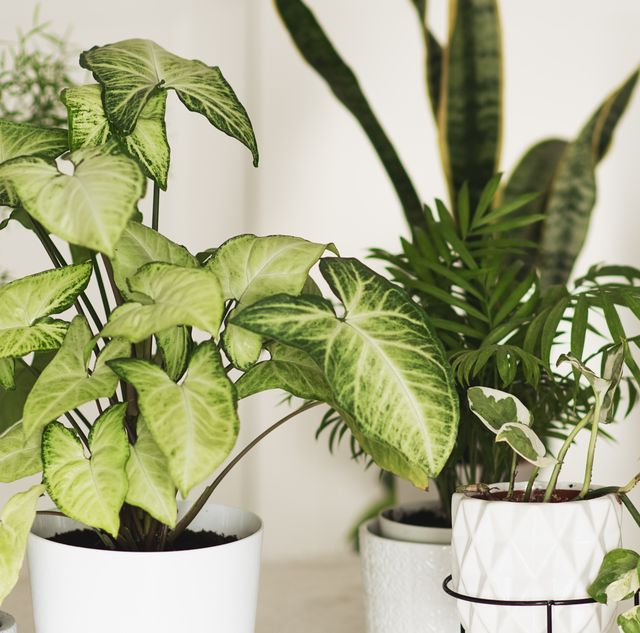 26 best air purifying plants for the home