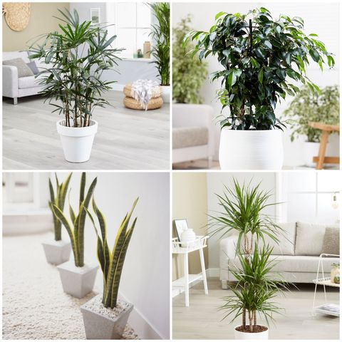 10 Best Air Purifying Plants For The Home House Plant Nasa Study on army study, sally ride study, facebook study,