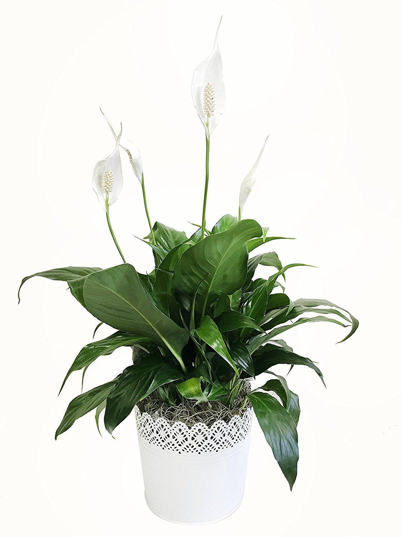 6 Plantas de interior que mejoran (mucho) la calidad del aire de tu casa