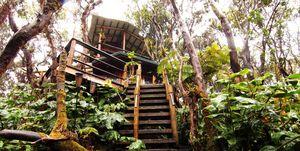 Casa en el árbol en el volcán de Kilauea en Hawaii