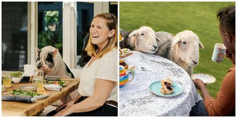 Sheep, Sheep, Adaptation, Organism, Livestock, Art, Happy, Cow-goat family, Eating,