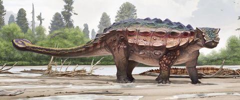Akainacephalus johnsoni spiky dinosaur utah