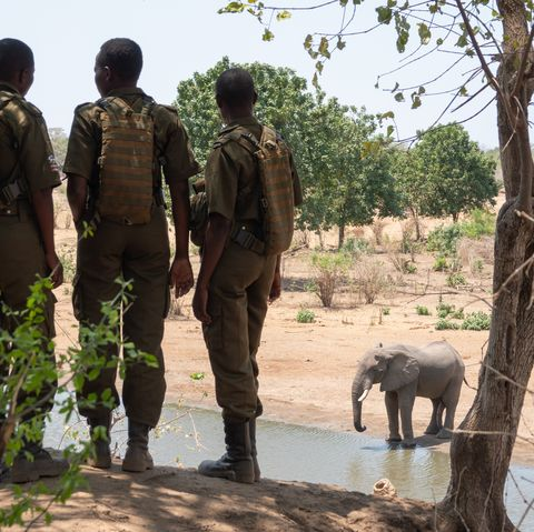 Zimbabwe Akashinga Ranger with elephants at Kim Butts waterhole
