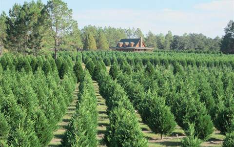 Christmas Tree Farms In Georgia.The Best Christmas Tree Farm In Every State In 2018 Best