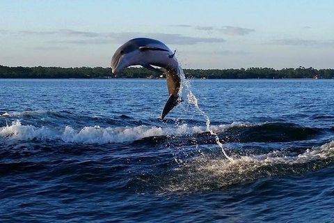 Water, Jumping, Dolphin, Sea, Recreation, Common bottlenose dolphin, Cetacea, Marine mammal,
