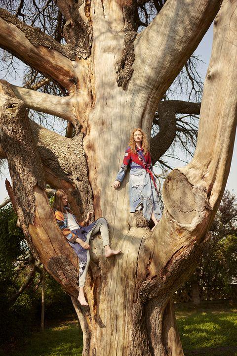 Tree, Branch, Woody plant, Trunk, Plant, Wood, Trunk, Plant stem,