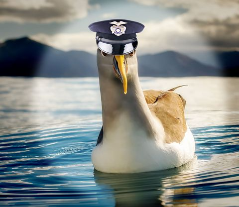 Bird, Beak, Water bird, Seabird, Water, Reflection, Calm, Wildlife, Albatross, Stock photography,