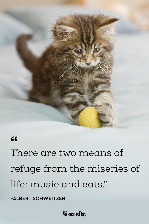 cat quotes - Albert Schweitzer