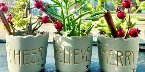 Flowerpot, Plant, Flower, Houseplant, Natural foods, Vegetable, Fruit, Radish, Local food, Food,