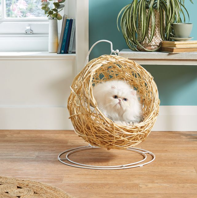 aldi is selling a hanging egg chair for pets — aldi offers