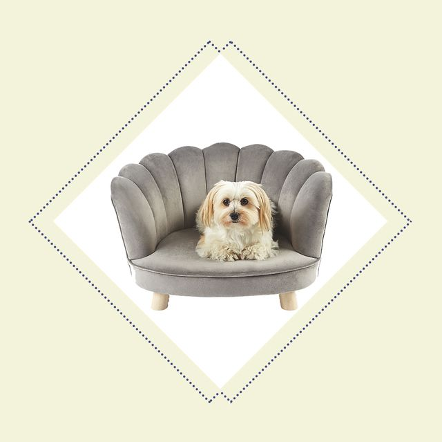 Aldi Launches Velvet Scalloped Chairs For Pets Aldi Offers
