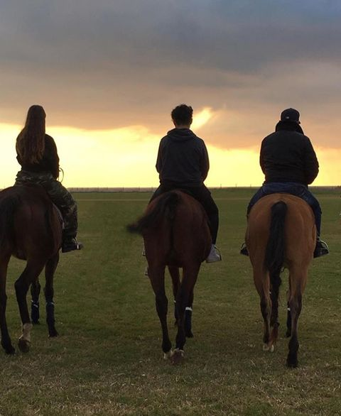 Horse, Bridle, Rein, Trail riding, Animal sports, Halter, Equestrianism, Equestrian sport, Recreation, Ecoregion,