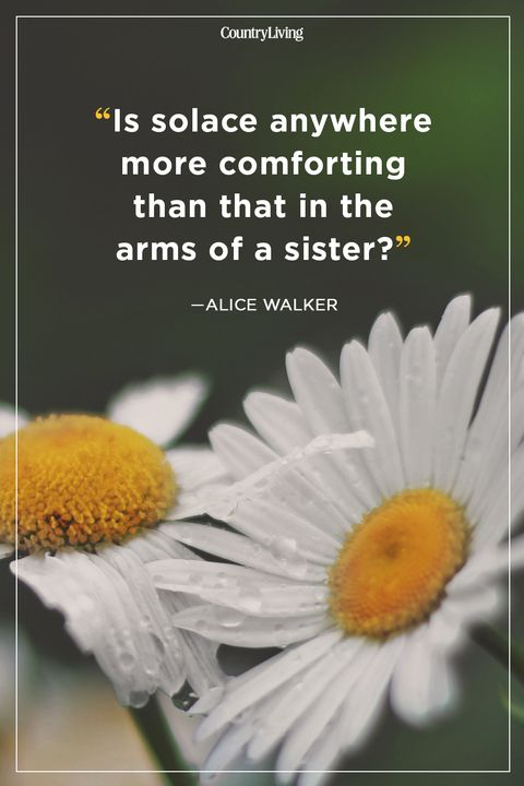 alice walker sister quote