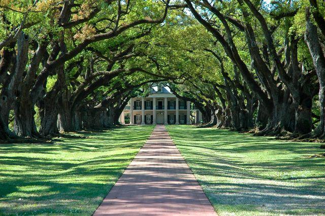 alley of oaks