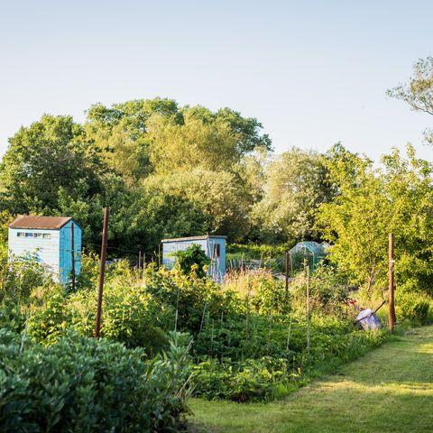 Allotment garden in England