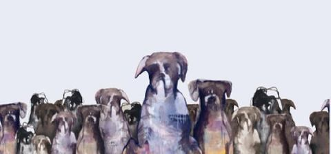 Dog breed, Carnivore, Dog, Working animal, Fawn, Liver, Companion dog, Collar, Snout, Sporting Group,
