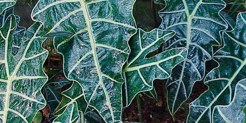 Leaf, Plant, Pattern, Botany, Terrestrial plant, Flower, Design, Plant pathology, Perennial plant,