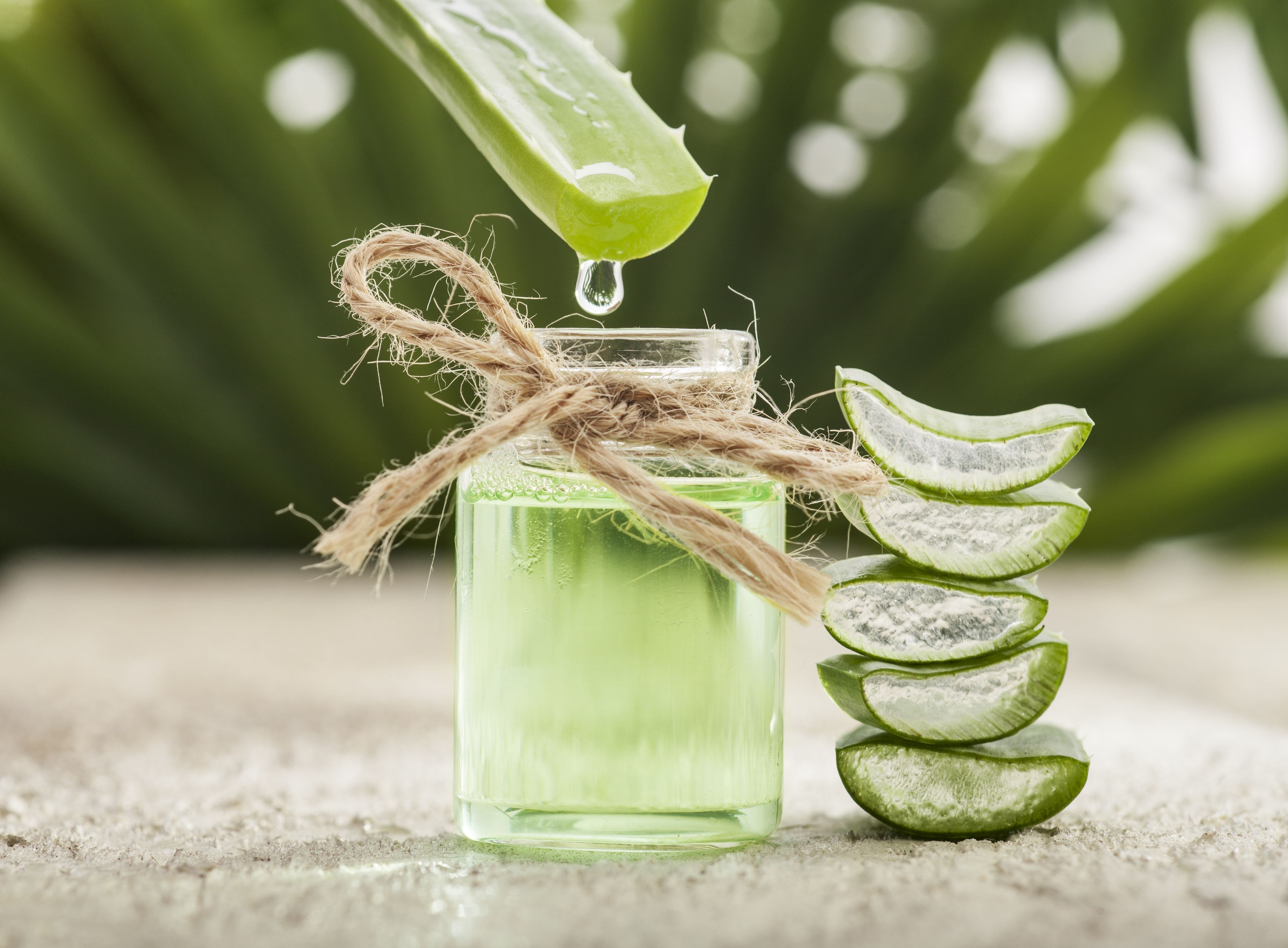 can drinking aloe juice help you lose weight?