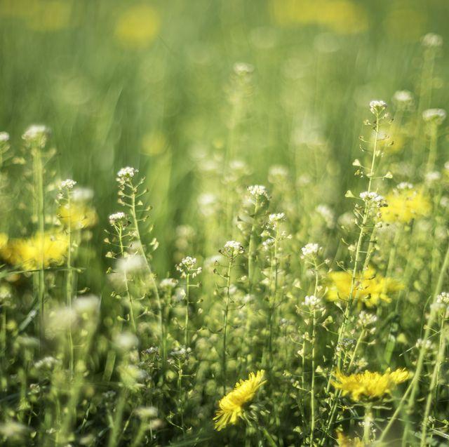8 ways to stop hay fever ruining your sleep