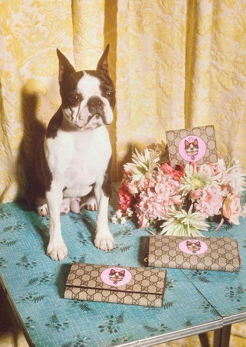 ed75f76016b Als je hond aan de Prozac moet omdat je dacht dat hij een handtas was