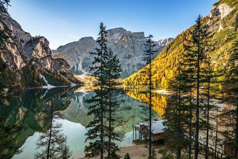 Larix lyalliiSubalpine Larch, Reflection, Nature, Natural landscape, Mountain, Mountainous landforms, Tree, Wilderness, Water, Sky,