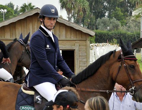 Horse, Halter, Bridle, Mammal, Vertebrate, Rein, Equestrianism, Equitation, Horse tack, English riding,