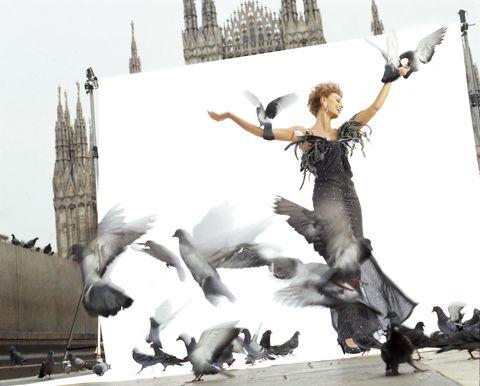 Vertebrate, Bird, Spire, Flock, Wing, Tower, Beak, Steeple, Stock photography, Feather,