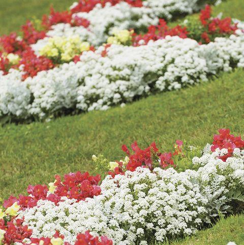 14 Best Edging Plants Plants For Walkway Borders