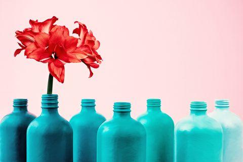 Amaryllis in painted bottle vase