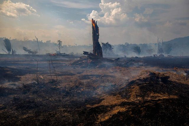 view of a burnt area of forest in altamira, para state, brazil, oin the amazon basin, on august 27, 2019   brazil will accept foreign aid to help fight fires in the amazon rainforest on the condition the latin american country controls the money, the president's spokesman said tuesday photo by joao laet  afp        photo credit should read joao laetafp via getty images