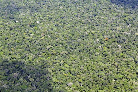 Vegetation, Aerial photography, Bird's-eye view, Plant community, Groundcover, Biome, Grass, Forest, Plant, Rainforest,