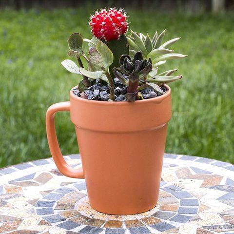 Amazon Ceramic Flower Pot and Mug