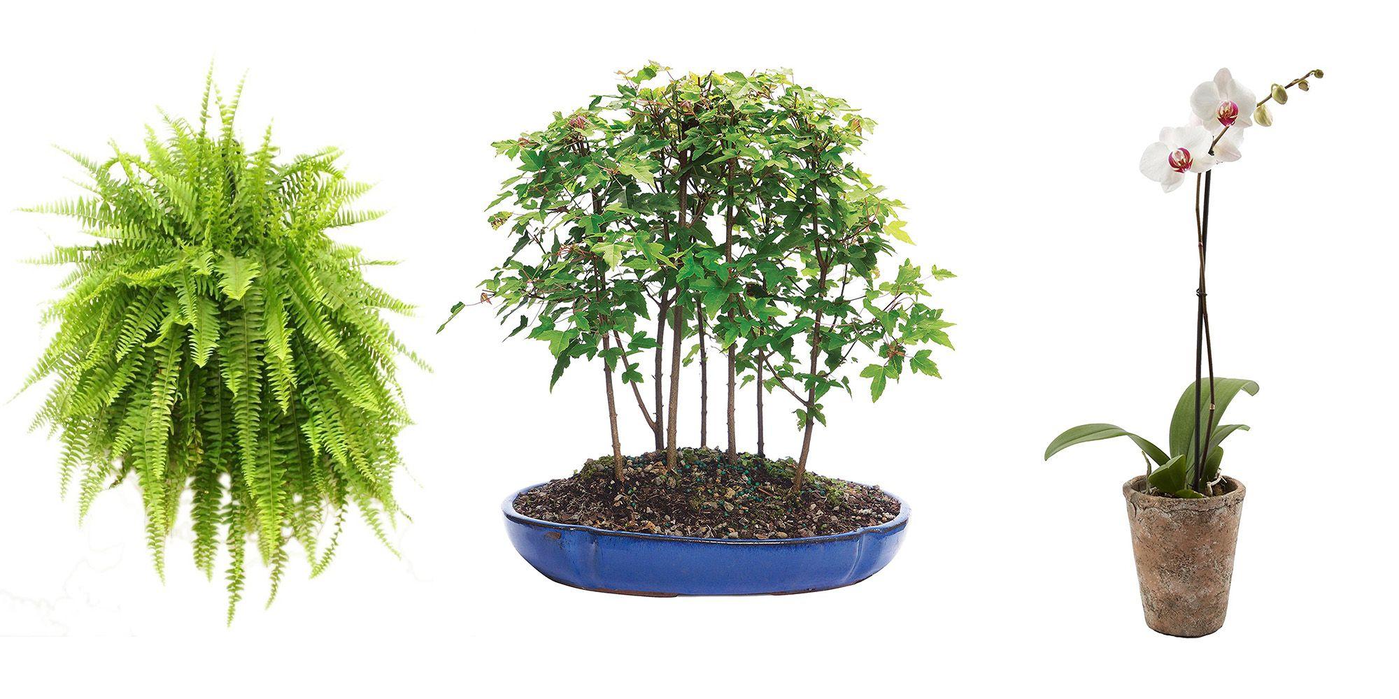 Amazon Just Launched A Garden Shop Purchase Live Plants Online