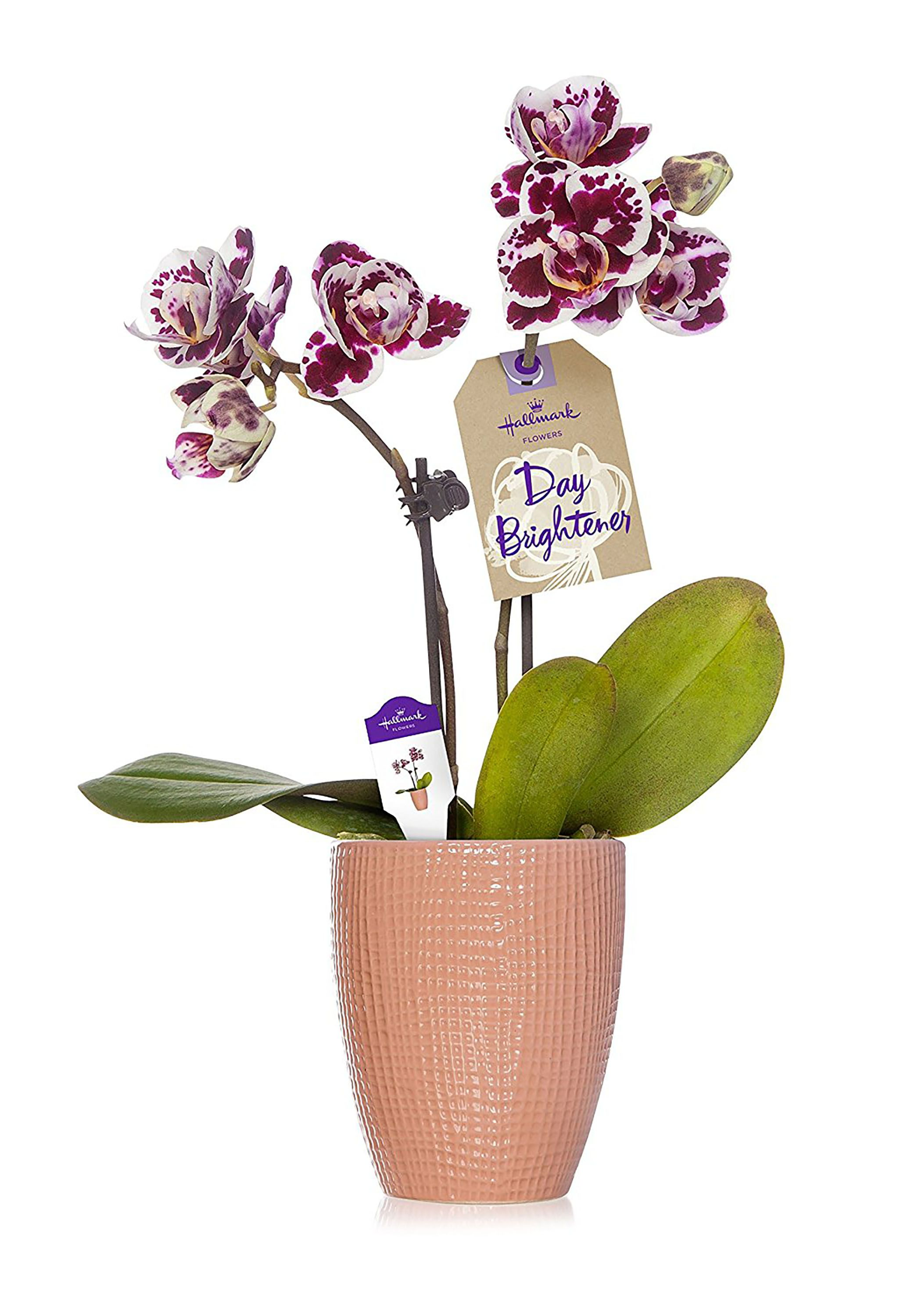 59 best mothers day gifts inexpensive ideas for mothers day gifts 59 best mothers day gifts inexpensive ideas for mothers day gifts under 50 izmirmasajfo