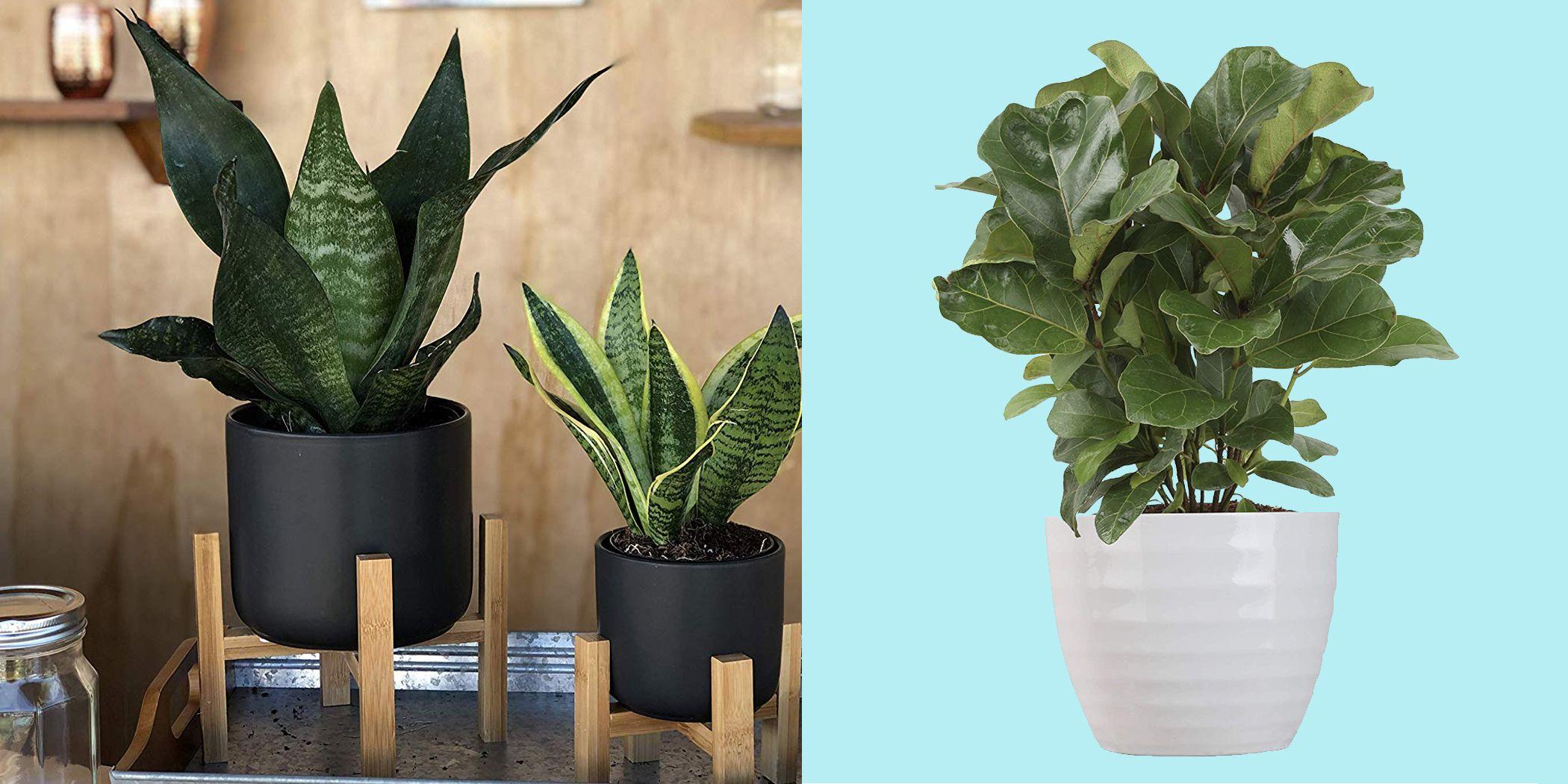 Amazon Is Having a Huge Sale on Best-Selling Plants — But It's Ending Soon
