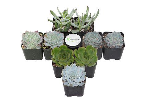 amazon-plant-shop
