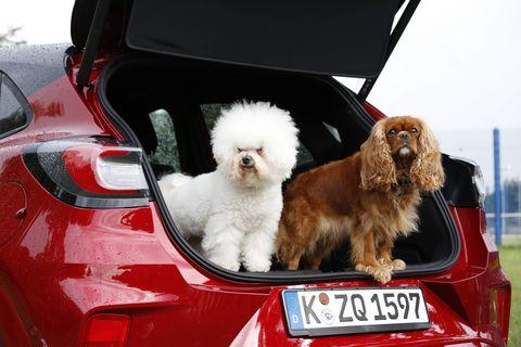 Ford Puma maletero mascotas