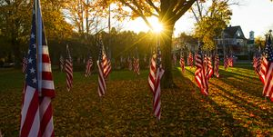 American Flags in Public Park for Veterans Day