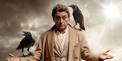 raven, crow, bird, crow like bird, human, adaptation, rock dove, raven, photography, perching bird,