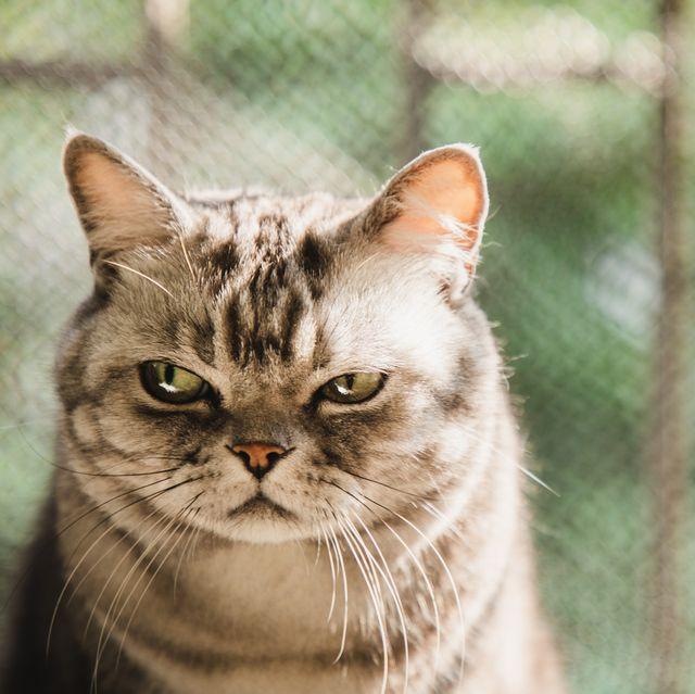 學習當會咬人的小貓,12星座氣場強大秘訣