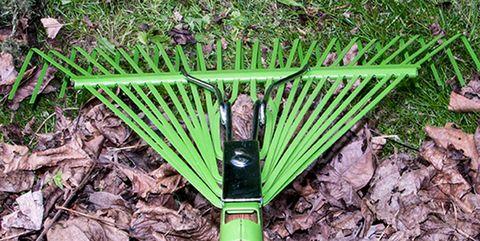 Plant, Grass family, Rake, Grass, Tree, Plant stem, Vascular plant,