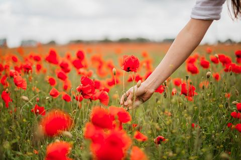 People in nature, Flower, Field, Coquelicot, Plant, Red, Spring, corn poppy, Flowering plant, Poppy,