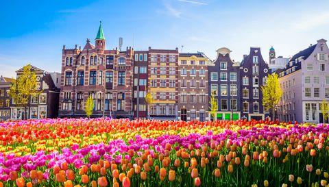 Flower, Tulip, Spring, Landmark, Plant, Leaf, Tree, Architecture, Garden, Lily family,
