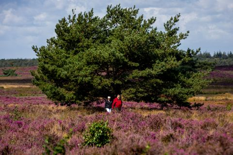netherlands nature heather