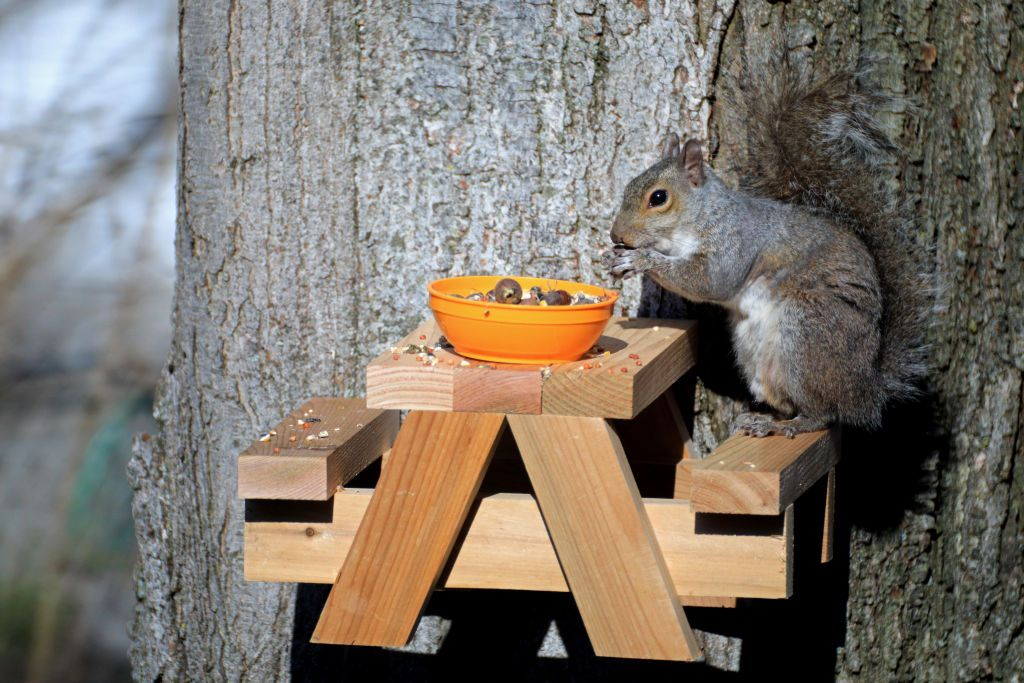 Building Tiny Picnic Benches For Squirrels